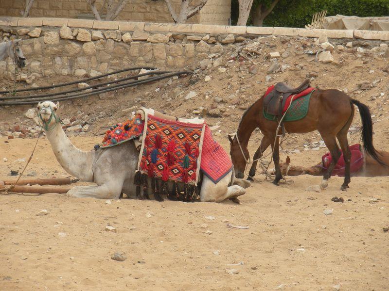 Egypt april2011 200